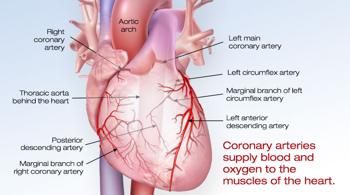 Earnings Disclaimer >> What is Cardiovascular Disease? – Recert911 - CPR, ACLS ...